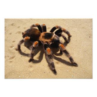 Tarantula Fotografías