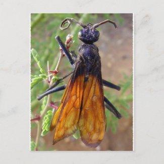 Tarantula Hawk postcard