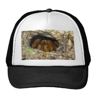 Tarantula Hide-Away Trucker Hat