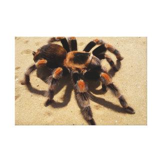 Tarantula Impresión En Lienzo