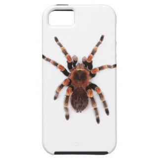 Tarantula iPhone 5 Carcasa