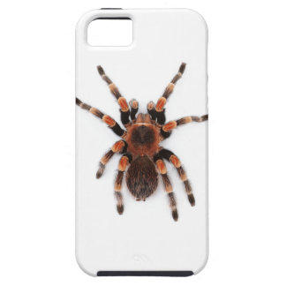 Tarantula iPhone 5 Cases