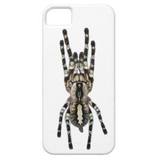 Tarantula iPhone Case iPhone 5 Cover