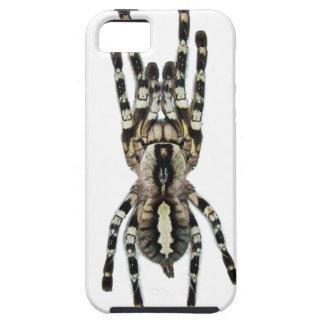 Tarantula iPhone Case iPhone 5 Covers