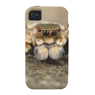 Tarantula Jumping Bird Spider awesome accessories Vibe iPhone 4 Cover