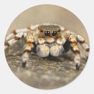 Tarantula Jumping Bird Spider awesome accessories Classic Round Sticker