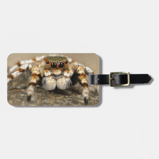 Tarantula Jumping Bird Spider awesome accessories Luggage Tags