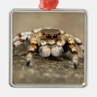 Tarantula Jumping Bird Spider awesome accessories Ornaments