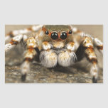 Tarantula Jumping Bird Spider awesome accessories Rectangle Sticker