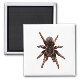 Tarantula Refrigerator Magnet