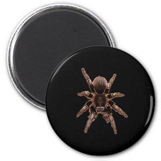 Tarantula Refrigerator Magnets