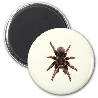 Tarantula Fridge Magnet