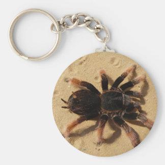 Tarantula Photo Basic Round Button Keychain