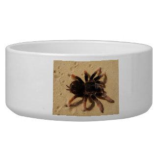 Tarantula Photo Bowl