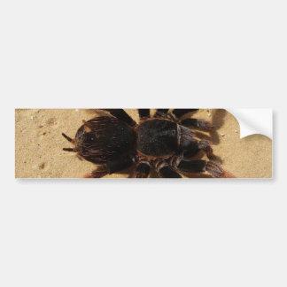 Tarantula Photo Bumper Sticker