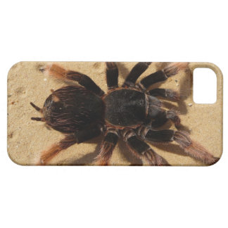 Tarantula Photo iPhone SE/5/5s Case