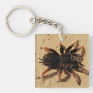 Tarantula Photo Single-Sided Square Acrylic Keychain