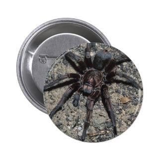 Tarantula Pin Redondo De 2 Pulgadas