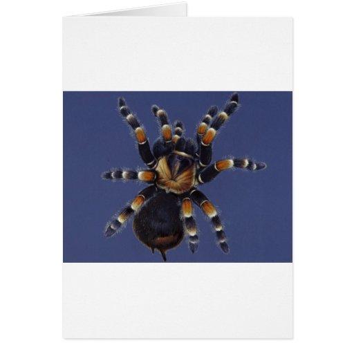 Tarantula Portrait Card