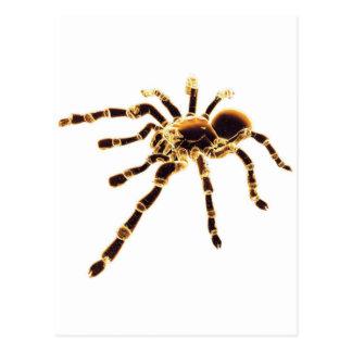 Tarantula Post Cards