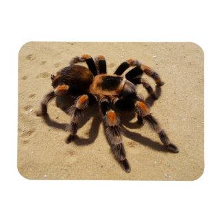 Tarantula Rectangular Photo Magnet