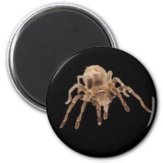 Tarantula spider 2 inch round magnet
