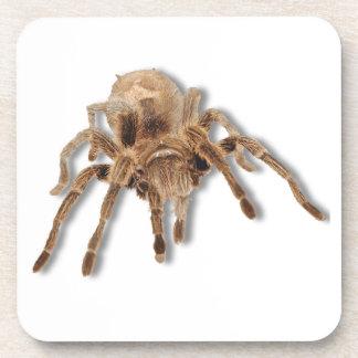 "Tarantula spider Cork Coaster (6) 3.8x3.8"""