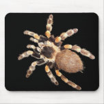 Tarantula Spider Mousepad