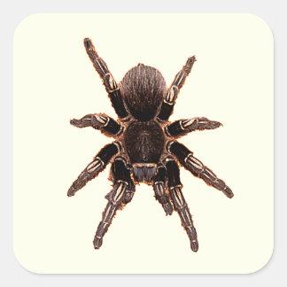 Tarantula Square Sticker