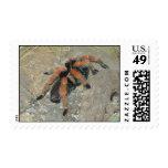 Tarantula Stamp