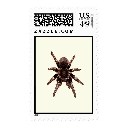 Tarantula Stamps