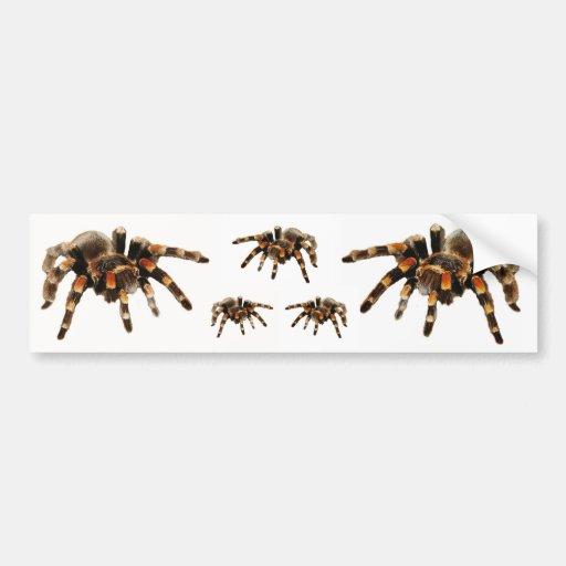Tarantulas, tarantula bumper stickers