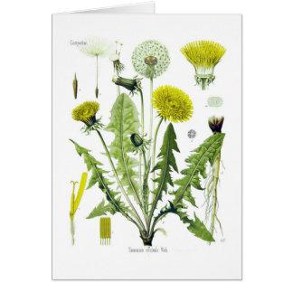 Taraxacum officinale (Dandelion) Greeting Card