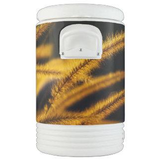 Tarde caliente del verano vaso enfriador igloo