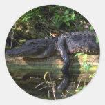 Tarde del cocodrilo, marismas, la Florida Etiquetas