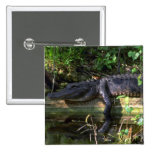 Tarde del cocodrilo, marismas, la Florida Pins