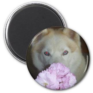 ¡Tarde el tiempo para oler las flores! Imán Redondo 5 Cm