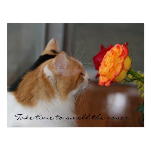 """""""Tarde el tiempo para oler los rosas """" Tarjetas Postales"""