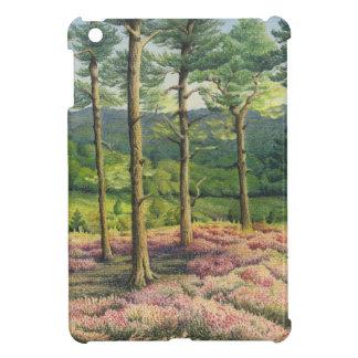 Tarde Sun, pinos de las colinas de Surrey