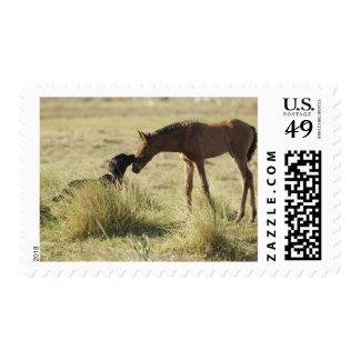 Tarifa, Cadiz, Andalusia, Spain 2 Stamp