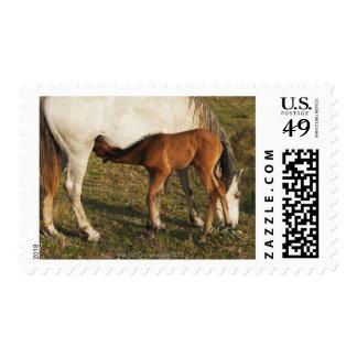 Tarifa, Cadiz, Andalusia, Spain Postage Stamp