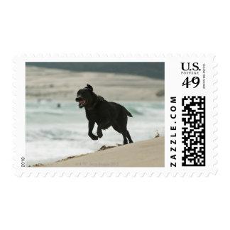 Tarifa, Cadiz, Andalusia, Spain Postage Stamps
