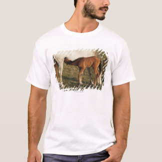 Tarifa, Cadiz, Andalusia, Spain T-Shirt
