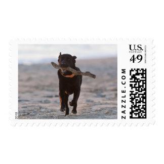 tarifa, cadiz, spain stamp