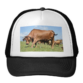 Tarine cow in the French Alps Trucker Hat