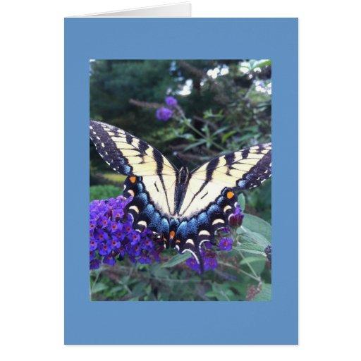 Tarjeta 2 de la mariposa de Swallowtail