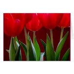 Tarjeta 2 del tulipán