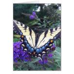 Tarjeta 3 de la mariposa de Swallowtail