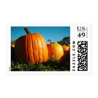 Tarjeta 4 de Halloween - Pumpkins.jpg Sello