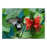Tarjeta 4 de la mariposa